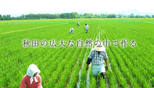 秋田の広大な自然の中で作る