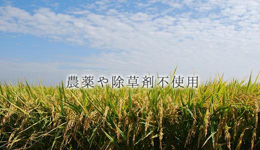 農薬や除草剤不使用