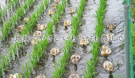 地球にやさしいあいがも農法で